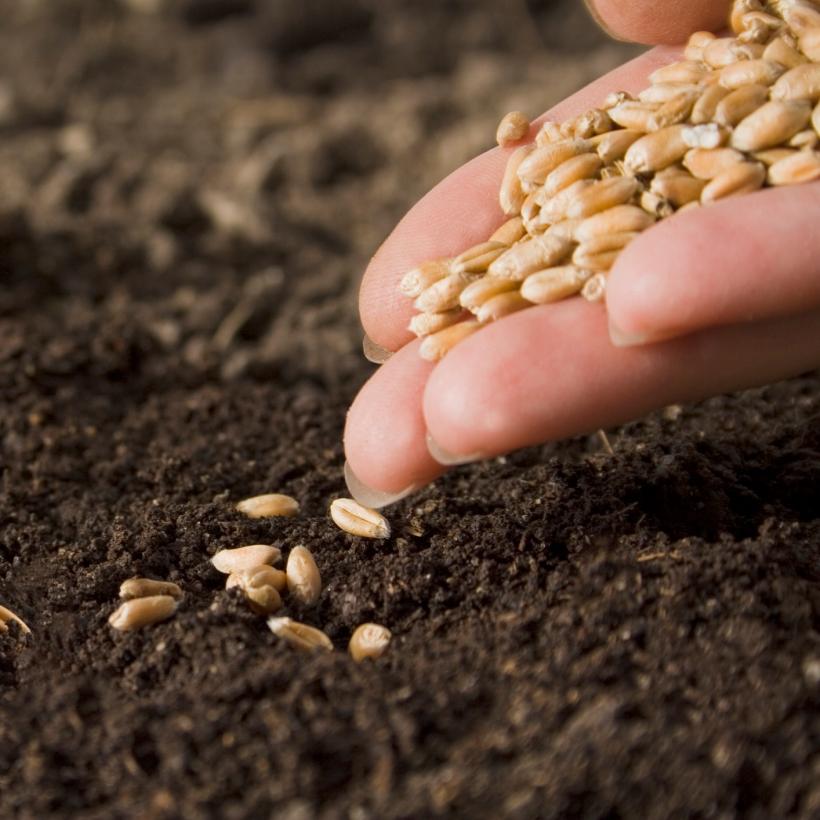 semillas-1